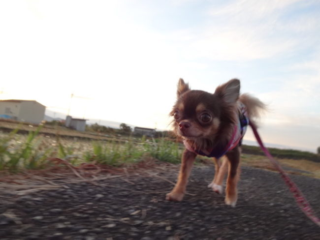 ダルマが走る写真