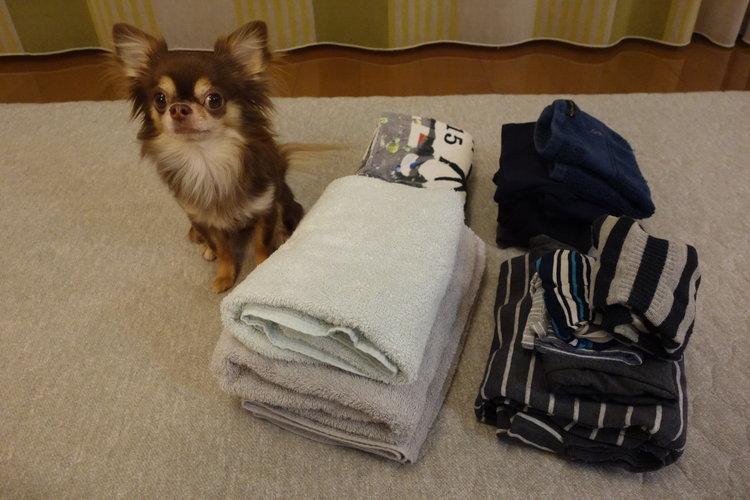 洗濯物の写真